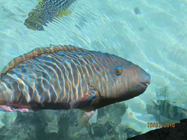 Фото рыбок