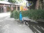 Парадайз Парк (Paradise Park Farm) Самуи – самостоятельная поездка