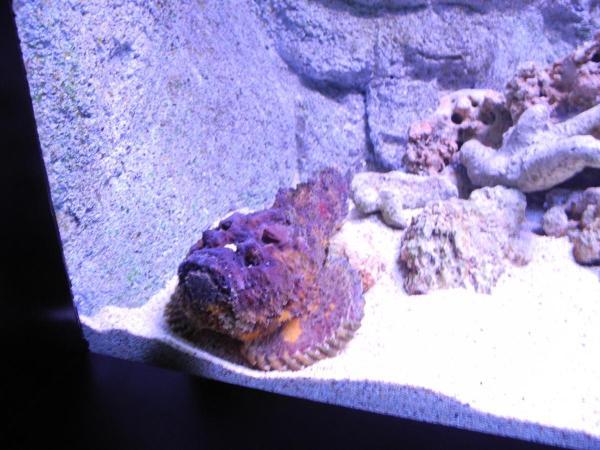 Одна из рыб в океанариуме Siam Ocean World