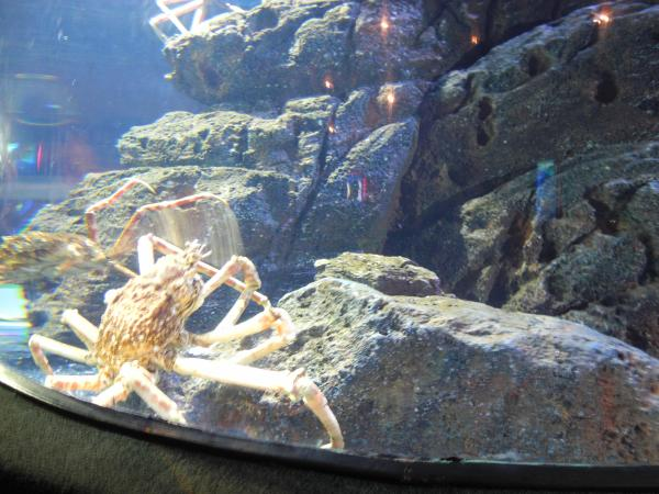 Один из обитателей океанариума Siam Ocean World